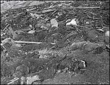 Bodies left unburied along the Yangtze River. Photo taken by a Japanese soldier, Murase Moriyasu, of the 17th Motorized Company of the Meguro Supply and Transport Regiment.