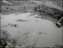 "A pond filled with corpses. ""This is a scene typical of many of the ponds inside the city after the occupation of the city by the Japanese,"" noted Forster."